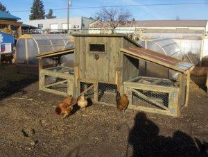 western chicken coop